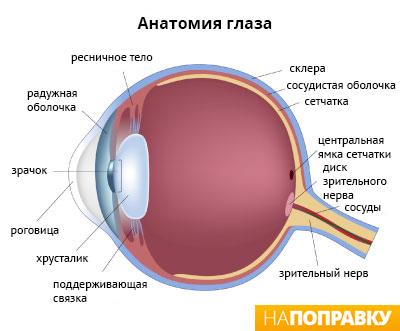 Можно ли восстановить зрение при близорукости упражнения