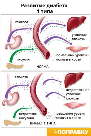эффективные лекарства от паразитов всех видов